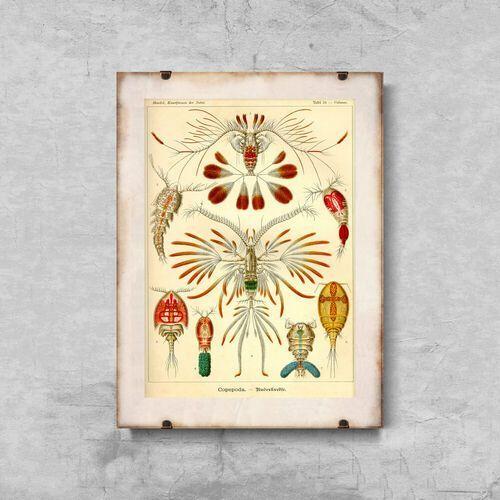 Plakaty w stylu retro Plakaty w stylu retro Marine Copeoda Ernst Haeckel