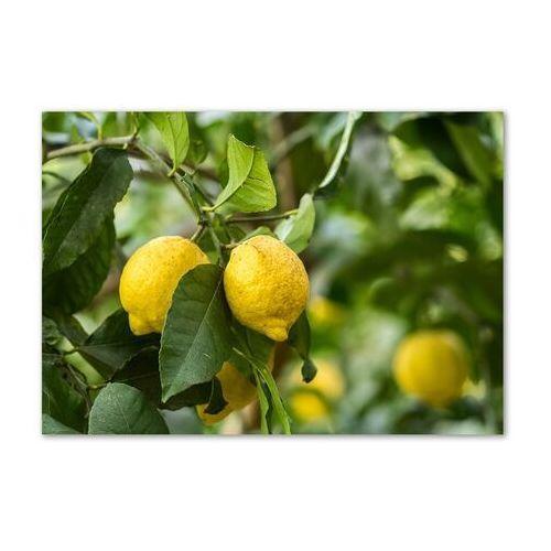 Foto obraz akryl cytryny na drzewie marki Wallmuralia.pl