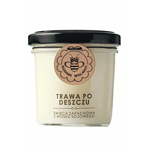 trawa po deszczu świeca zapachowa z wosku sojowego marki Miodowa mydlarnia