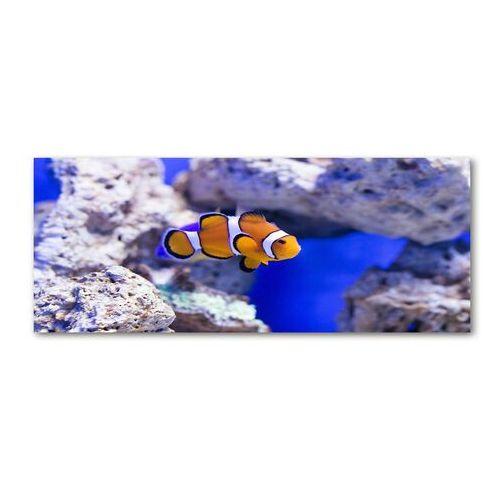 Wallmuralia.pl Foto obraz akryl błazenek rafa koralowa