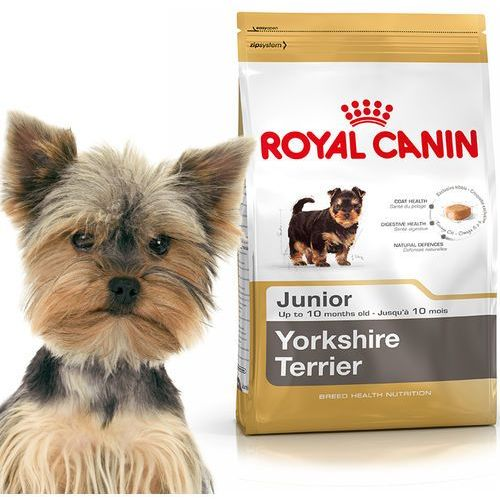 mini yorkshire junior 1.5kg marki Royal canin