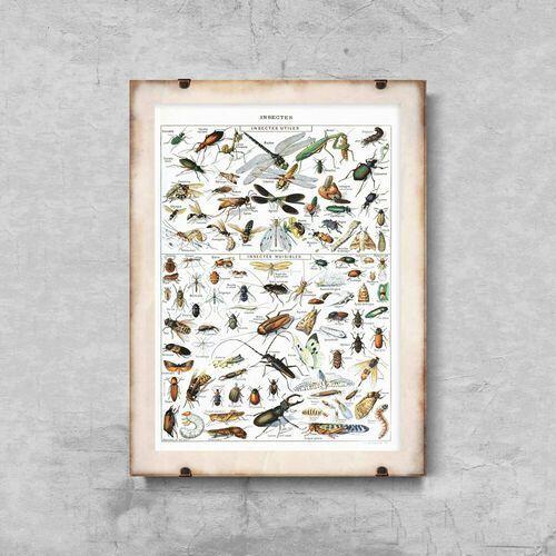 Plakat w stylu retro plakat w stylu retro owady adolphe millot marki Vintageposteria.pl