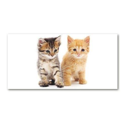 Foto obraz akryl Brązowy i rudy kot