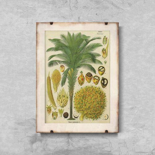 Plakaty w stylu retro plakaty w stylu retro plakat botaniczny z palmy kokosowej marki Vintageposteria.pl