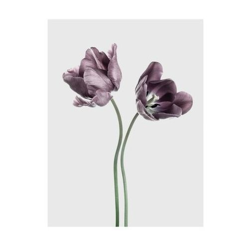 Art canvas Plakat tulipany 30 x 40 cm (5901844215894)