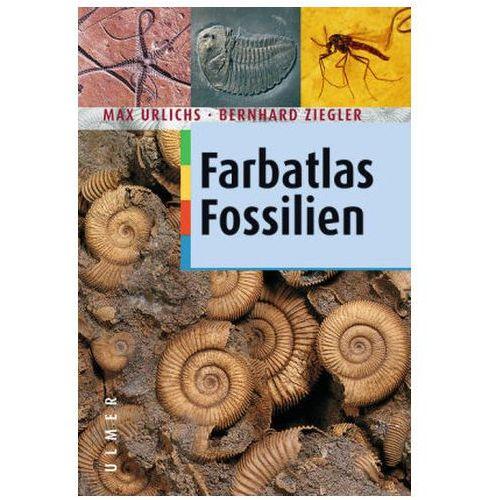 Farbatlas Fossilien (9783800135783)