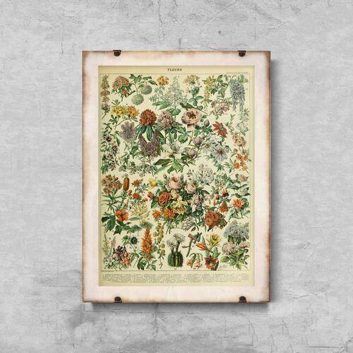 Vintageposteria.pl Plakat vintage plakat vintage kwiatki adolphe millot