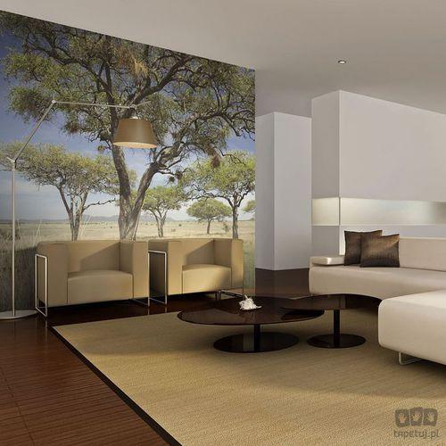 Fototapeta Drzewa akacjowe - Park Narodowy Serengeti, Afryka 100403-72, 100403-72