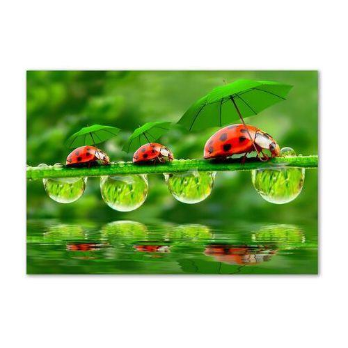 Foto obraz akryl biedronki parasole marki Wallmuralia.pl