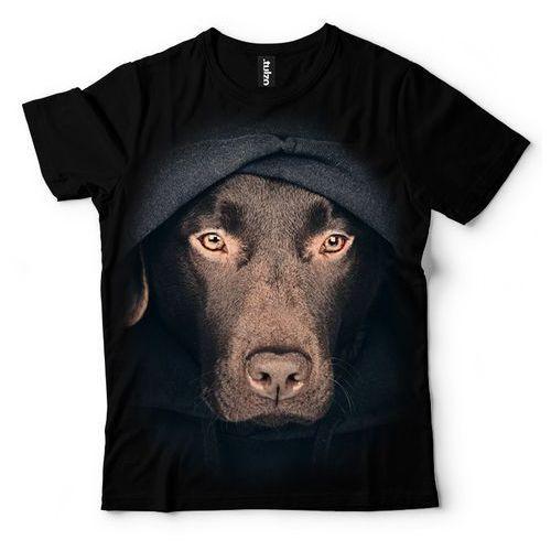Labrador z Kapturem