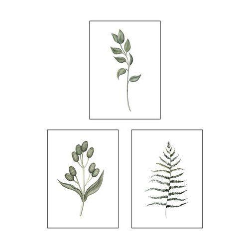 Art canvas Zestaw 3 plakatów botanika 13 x 18 cm (5901844231498)
