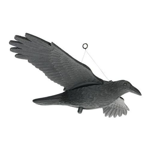 Odstraszanie Olbrzymi kruk w locie. kruk odstraszacz ptaków na balkon.