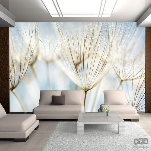Murando Fototapeta abstrakcyjne tło - nasiona dmuchawca 100406-97