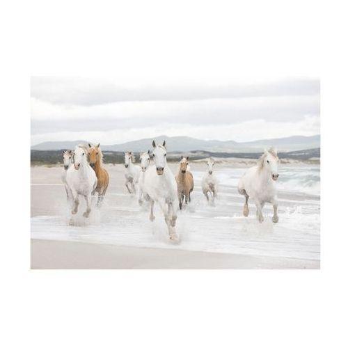 Komar Fototapeta white horses (4036834089863)