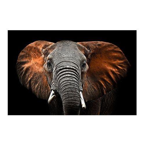 Obraz Glasspik Elephant 70 x 100 cm, GL AN 70X100 GL249