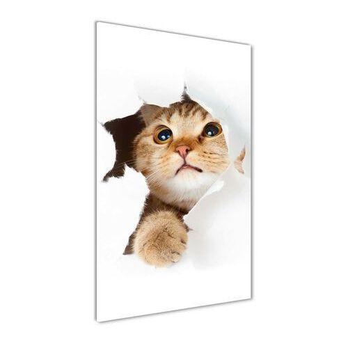 Nowoczesny obraz zdjęcie na akrylu Kot