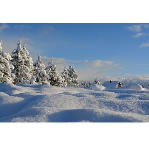 Wally - piękno dekoracji Fototapeta na ścianę skrzący się śnieg fp 3476