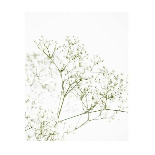 Art canvas Kanwa białe kwiaty iii 40 x 50 cm (5901844247925)