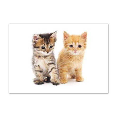 Foto obraz akryl brązowy i rudy kot marki Wallmuralia.pl