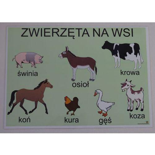 Bystra sowa Zwierzęta na wsi- plansza demonstracyjna