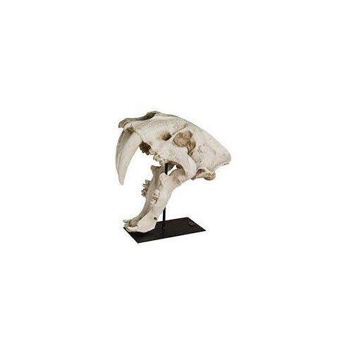 Authentic Models Dekoracja czaszka AR061, AR061