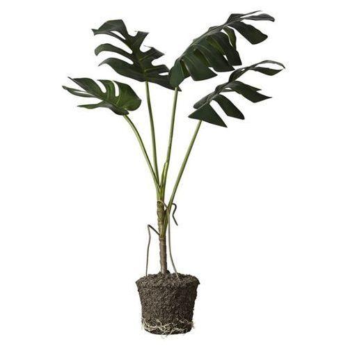 Roślina Monstera 86 cm
