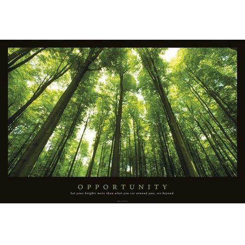 Opportunity - Las, promienie światła - plakat motywacyjny