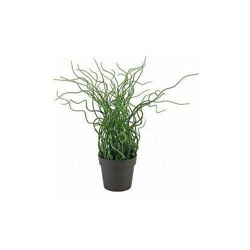 trawa korkociąg w doniczce, pe, sztuczna roślina, 38 cm marki Europalms