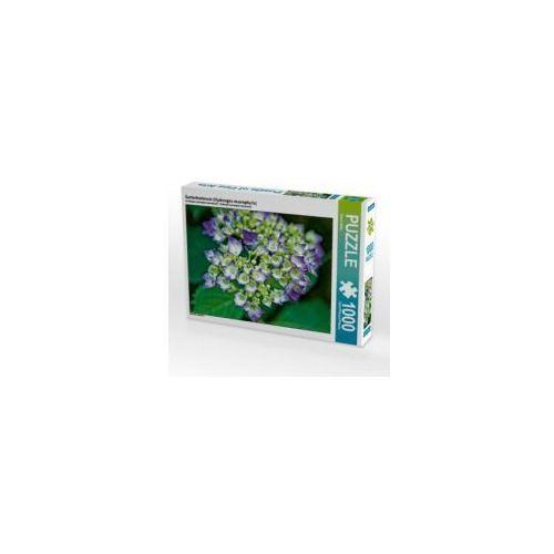 OKAZJA - Gartenhortensie (Hydrangea macrophylla), 1000 Teile