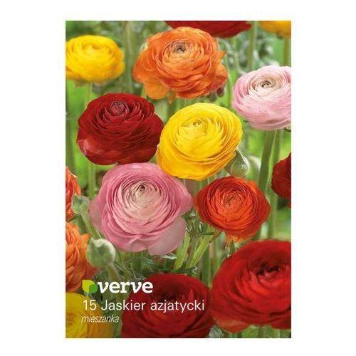 Verve Cebule jaskier jesienny mix 15 szt. (3663602483885)