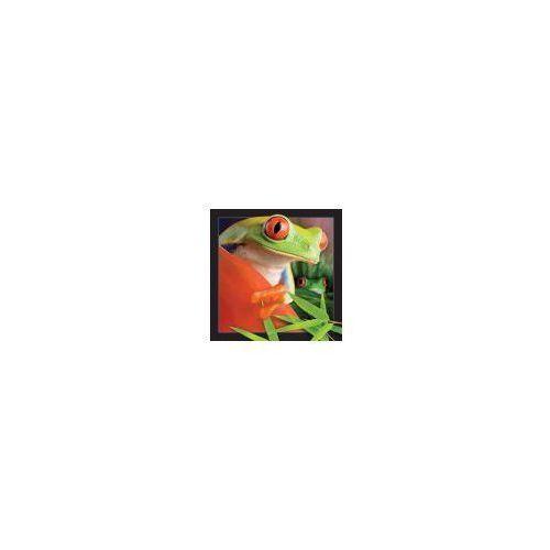 Pocztówka 3D Żaba - WORTH-KEEPING OD 24,99zł DARMOWA DOSTAWA KIOSK RUCHU (5710431000023)