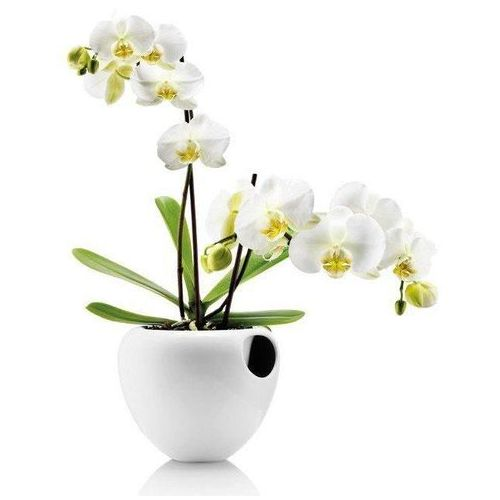 Eva solo Samopodlewająca doniczka orchid biała