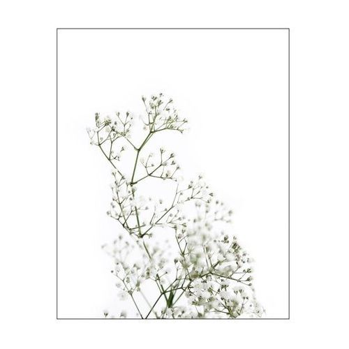 Reinders Obraz gypsohila 40 x 50 cm (8714597582260)