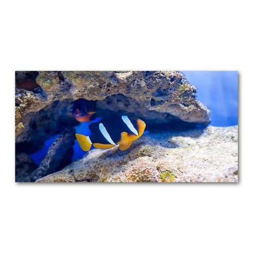 Fotoobraz na ścianę szklany Tropikalna ryba