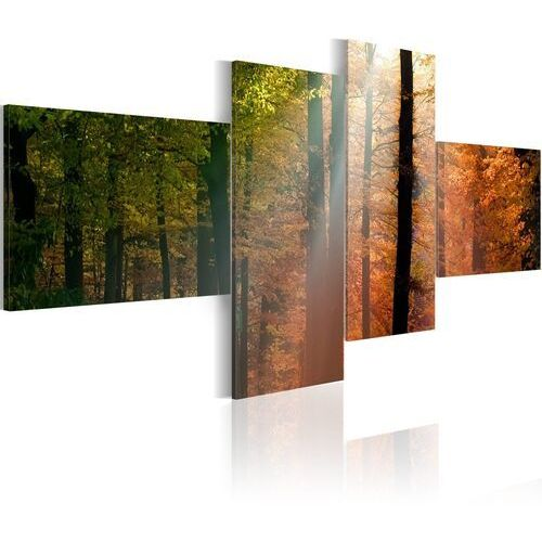 Obraz - Promyki słońca pośród drzew