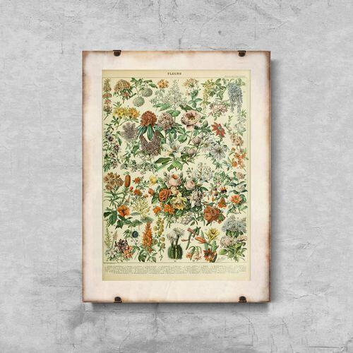 Plakat retro do salonu Plakat retro do salonu Kwiaty Adolphe Millot