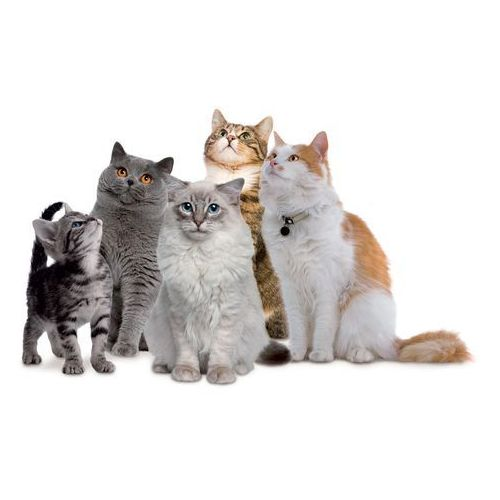 Próbki karm Forza10 dla kotów: z karmą - Forza10 DOSTAWA 24h GRATIS od 99zł