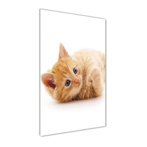Foto obraz akrylowy do salonu Mały rudy kot