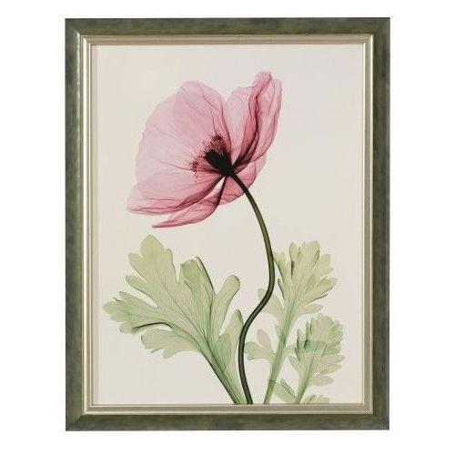 obraz pink poppy ii 46x41, 46 × 41 marki Dekoria