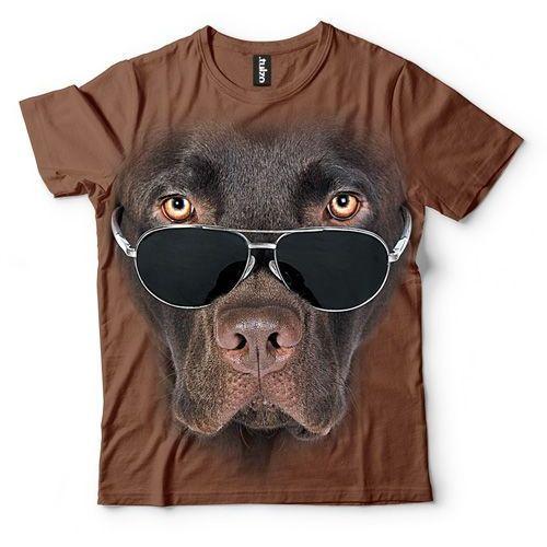 Labrador czekoladowy w okularach