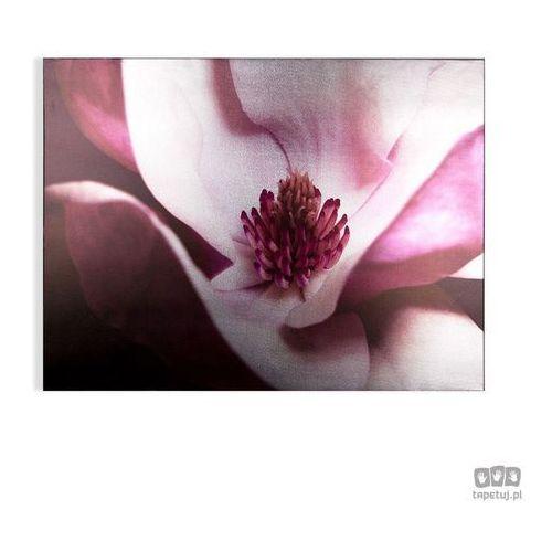 Graham&brown Obraz kwiat śliwki 104574