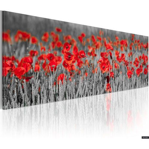 Selsey obraz - poppies among fields of wheat 120x40 cm (5902622534190)