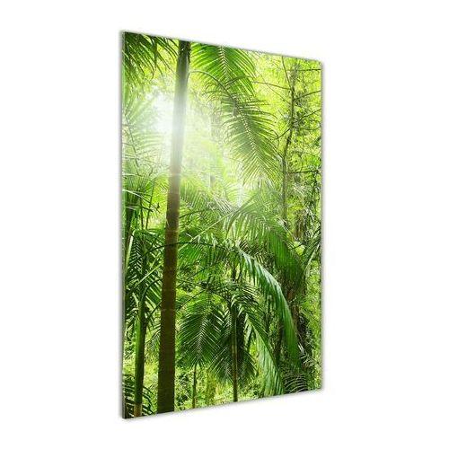 Foto obraz akrylowy do salonu Las deszczowy