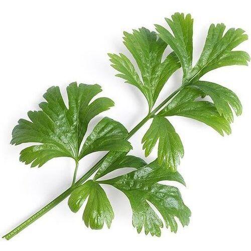 Véritable - Warzywa Liściowe - wkład nasienny - seler zwyczajny (do doniczek autonomicznych) (3760262510576)