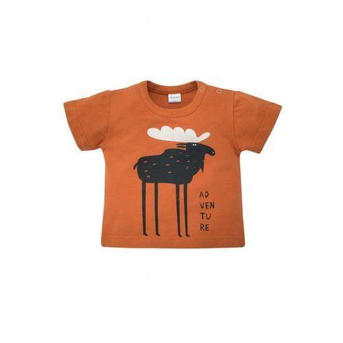 Pinokio T-shirt niemowlęcy bears club 5i38an