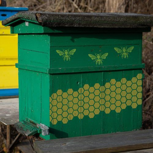 Nakleo Szablon malarski wielokrotny // pszczoła