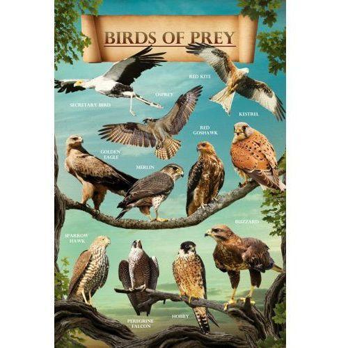 Gb Drapieżne ptaki orzeł jastrząb sokół... - plakat (5028486148110)