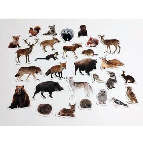 Magnesy poznaje zwierzęta leśne