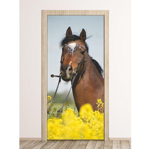 Fototapeta na drzwi koń pasący się na łące fp 6209 marki Wally - piękno dekoracji