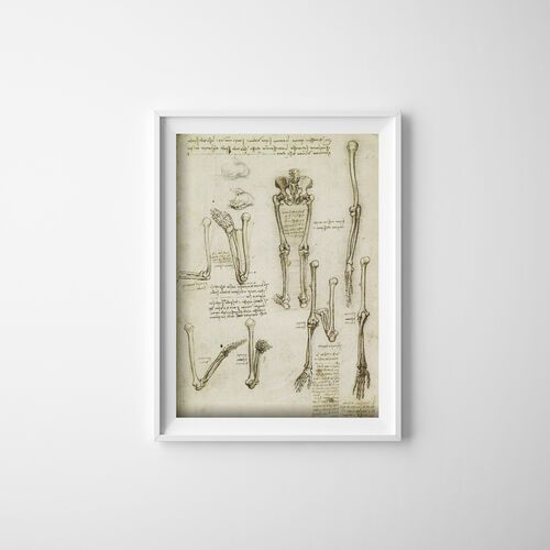 Plakat retro do salonu plakat retro do salonu anatomiczne kości da vinci marki Vintageposteria.pl